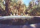 275682-Siwa_Oasis_Egypt